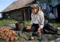 Из-за мирового неурожая в Украине взлетят цены на продукты