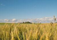 На Украине на 35% подорожает хлеб