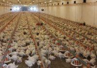 Реорганизовать путем присоединения к Государственной корпорации «Аграрный Донбасс»