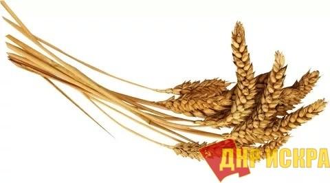 """""""Житницу СССР"""" добили буржуи. Украина больше не может обеспечивать себя хлебом"""
