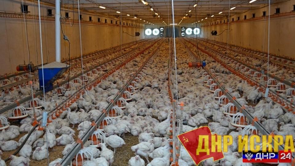 На Шахтерской птицефабрике сложилась критическая ситуация