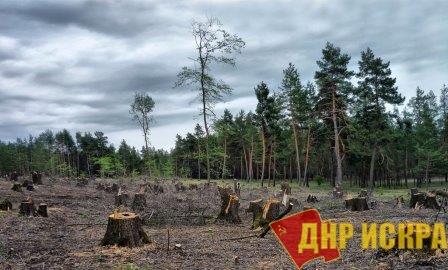 Кировский лес продают Китаю вслед за сибирской тайгой