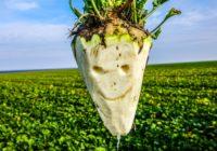 """Новости КПУ. Будни """"аграрной сверхдержавы"""": Посевы сахарной свеклы в Украине сократятся на 25%"""