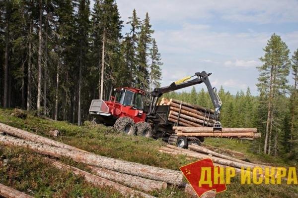Капитал уничтожает лесной фонд России