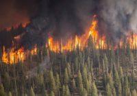 Кто спасёт леса России?