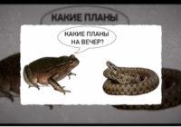 Беларусь и Лукашенко: капитализм с Батькиным лицом