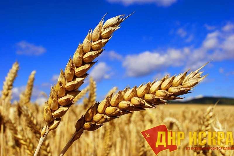 С хлебом будут проблемы. В Аргентине продолжается забастовка работников сельхозпредприятий
